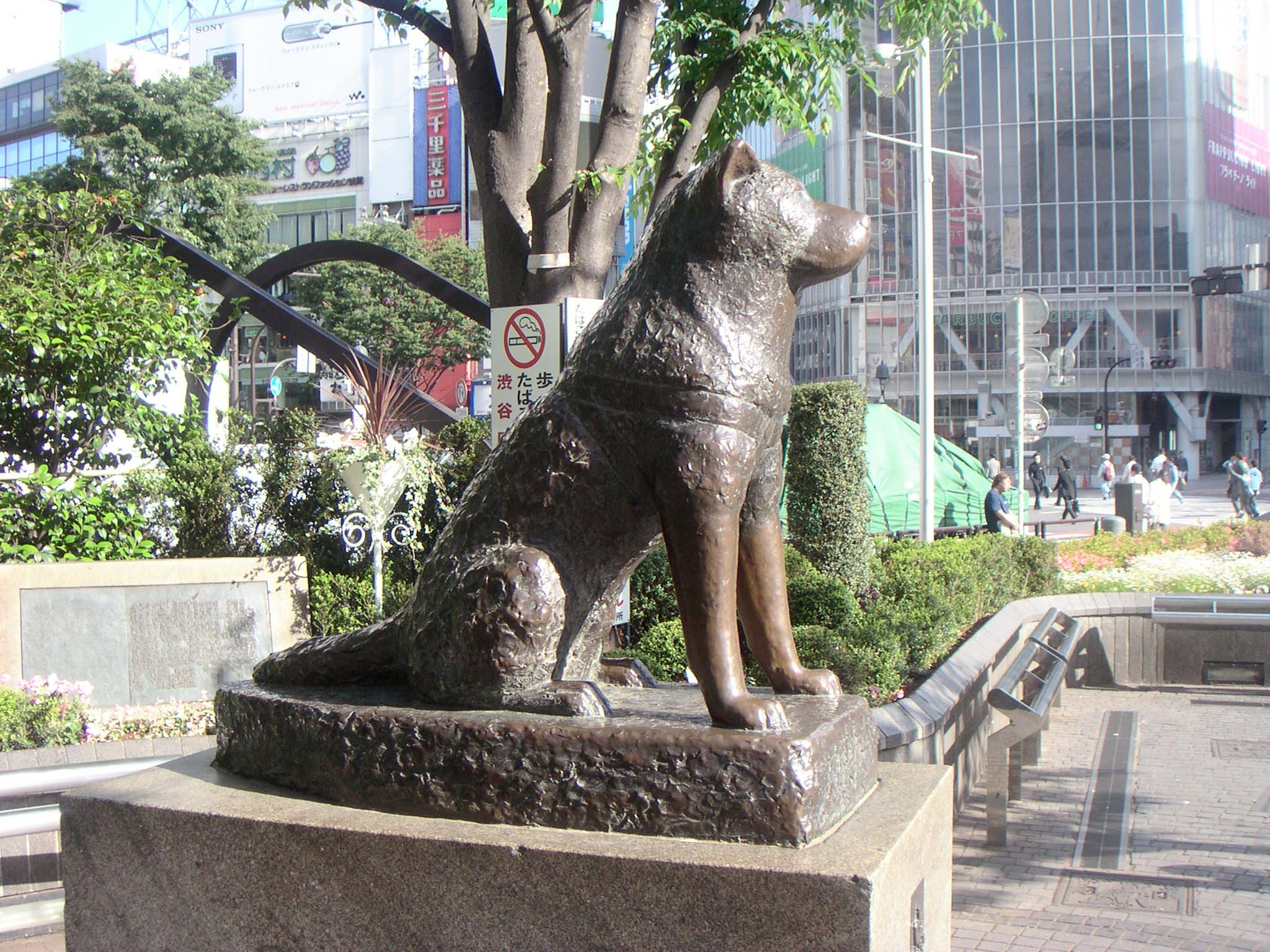AOB What was the biggest O Akita Hachiko